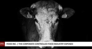 Food Inc. | The Corporate Controlled Food Industry Exposed