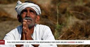 Full Documentary | Is GM Cotton Responsible For Over 300,000 Suicides And The Decline In India's Cotton Industry ?